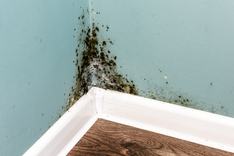 black mould on wall due to cavity wall insulation problem