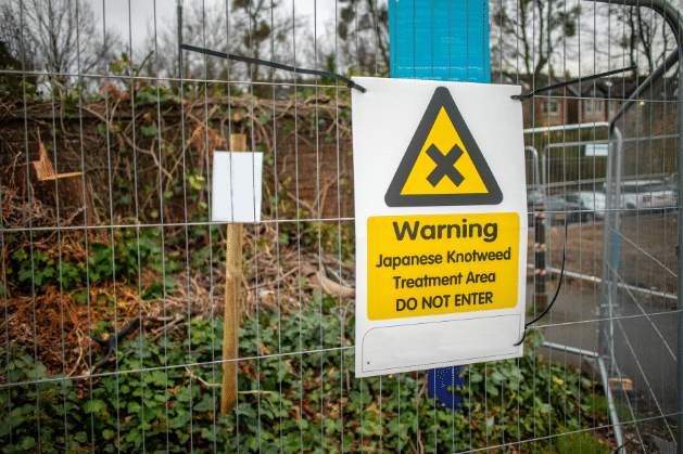 Japanese knotweed warning sign