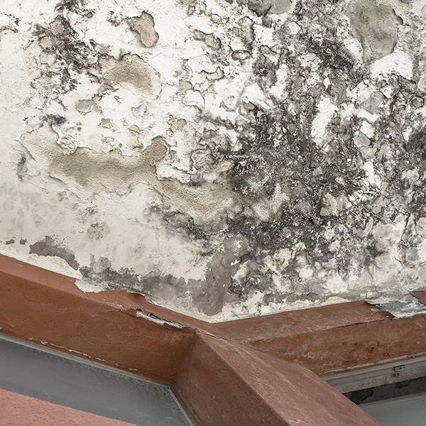 Cavity Wall with a damp problem insulation failure